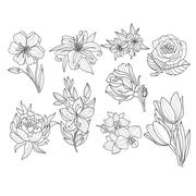 Flower Set. Hand Drawn Vector Illustration Stock Illustration
