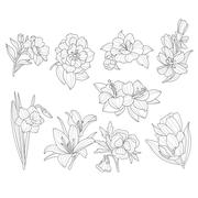 Flower Collection. Hand Drawn Vector Illustration Stock Illustration