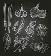 Culinary Herbs and Spices. Vintage Illustration - stock illustration