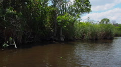 Riding In The Florida Everglades Stock Footage