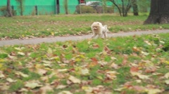 Dog running towardshis master in the Park - stock footage