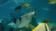 Fish Swimming in a Tank - stock footage