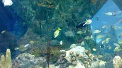 Albuquerque Aquarium Fish Swimming Wide - stock footage