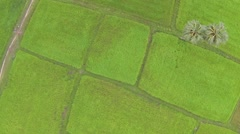Aerial view of bright green rice plantation in Thailand Stock Footage