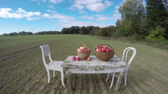 Table with apples, two chairs and cat in the field, 4K time lapse Stock Footage