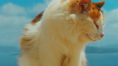 Ultra Close-up of a Cat Set Against Blue Sky Background Stock Footage