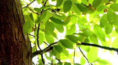 Bright lights under large tree with the wind blowing Stock Footage