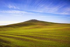 Field striped waves and olive trees uphiill. Tuscany, Italy Stock Photos