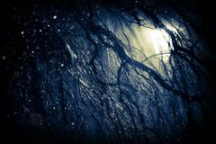 Winter Weather Background. First Snow at Night. Stock Photos