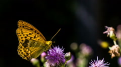 HD Butterly and flower Stock Footage