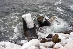 Breakwater covered by ice - stock photo