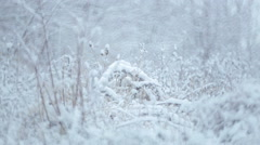Branches and shrubs with seeds in the snow. Winter landscape. Stock Footage