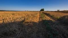 Beautiful stubble field under blue sky. Stock Footage