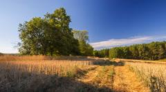 Beautiful stubble field under blue sky. - stock footage