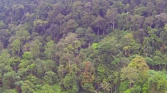 Trees in Thai jungle, aerial video Stock Footage