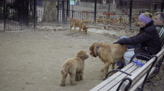 dog owners sitting on bench in large dog run in Washington Square Park with dogs - stock footage