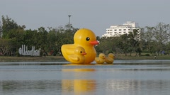 Giant yellow ducks floating in Nong Prachak park,Udon Thani,Thailand Stock Footage