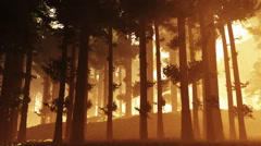 Mysterious Deep Pine Forest v2 1 Stock Footage