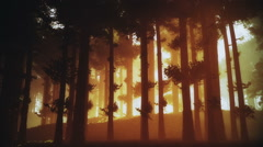 Mysterious Deep Pine Forest v2 3 Stock Footage