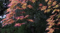 Fall Color at Buddhist Temple in Japan Stock Footage