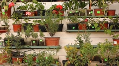 Decorative plants in pots Stock Footage