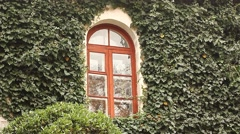 Window in ivy wall Stock Footage