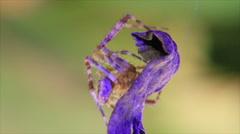Spider in violet light Stock Footage