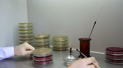 A microbiologist works with burner and petri dishes in laboratory Stock Footage