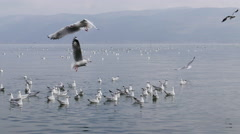 Seagull flying over water surface Stock Footage