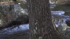 Creek and Tree in Kamikochi, Japan Stock Footage