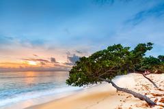 Sea grape trees leaning above a sandy Caribbean beach Kuvituskuvat
