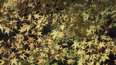 Autumn Color at Buddhist Temple in Japan Stock Footage