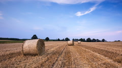 Stubble field at sunset. Beautiful rural landscape. Stock Footage