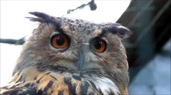 Eagle owl look around, close up head Stock Footage