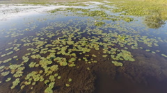 Low altitude flight over the deepwater marsh portion of a lake. Stock Footage