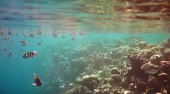 Tropical Coral Reef. Coral reef in the Maldives. Stock Footage
