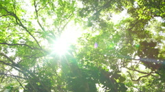 Beautiful Sunlight Flares in Tropical Rain Forest Jungle Canopy. Sunlight Fil Stock Footage