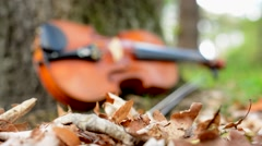 Camera focus dry leaves and violin by the tree in the forest - blend Stock Footage