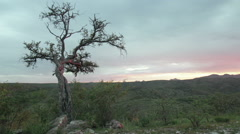 Timelapse of sunrise with dry tree and forest in background, Namibia Stock Footage