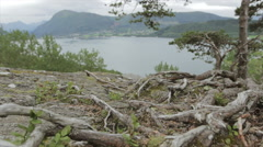 Dolly shot of aerial in Norway, tree in fg, lake in bg Stock Footage