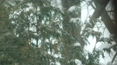 4K Snow Blown Infront of Trees Stock Footage