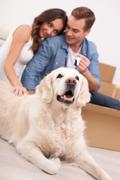 Attractive husband and wife are ready for relocation Stock Photos