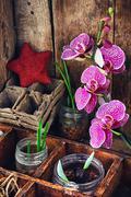 Plant breeding in the spring - stock photo