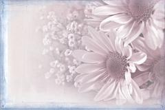 Pastel daisy bouquet Stock Illustration