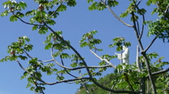 Christ of the Mercy statue behind trees Stock Footage