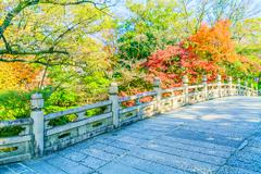 Autum season in japan - stock photo