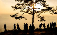 Travellers enjoying with view of morning mist with pine tree in Phu Kradueng  Stock Photos