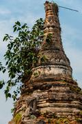 Close up of tree growing out a temple - stock photo