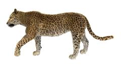 Big Cat Leopard - stock illustration