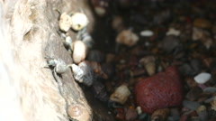 Stock Video Footage of Close up from hermit crabs climing